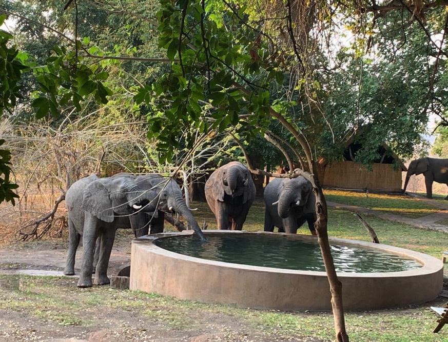 bumbusi wilderness camp hwange national park elephants swimming pool
