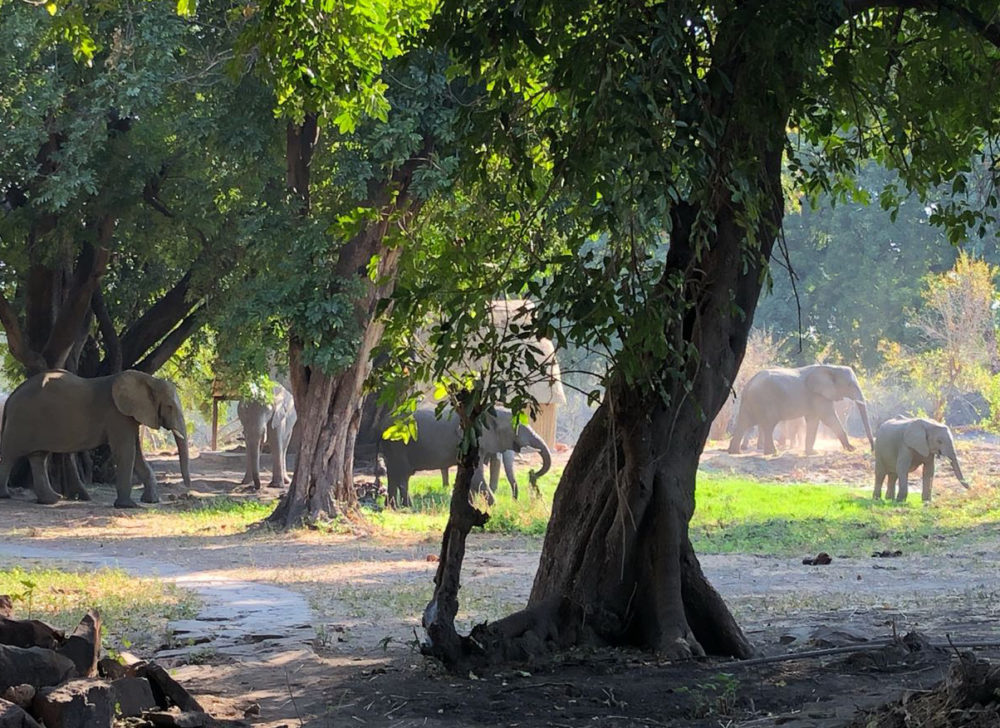 bumbusi wilderness camp hwange national park elephants in the camp